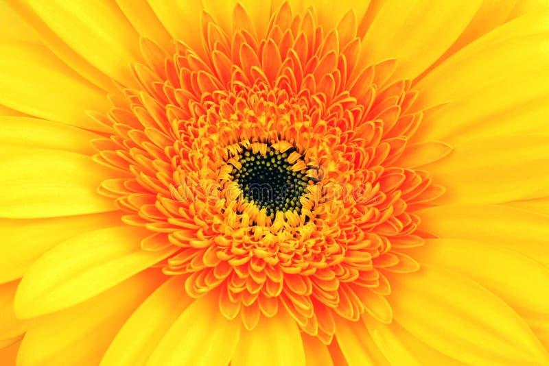Rot-gelber Blumenabschluß oben stockfotografie