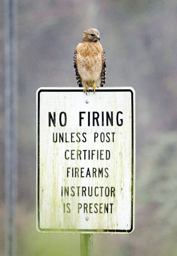 Rot-geschulterter Falke hockte auf Schießstandzeichen, Georgia, USA lizenzfreie stockfotos
