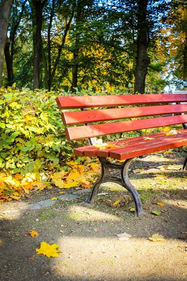 Rot, Holzbank im Park im Herbst lizenzfreie stockfotos