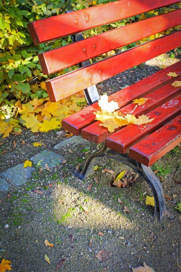 Rot, Holzbank im Park im Herbst stockfoto