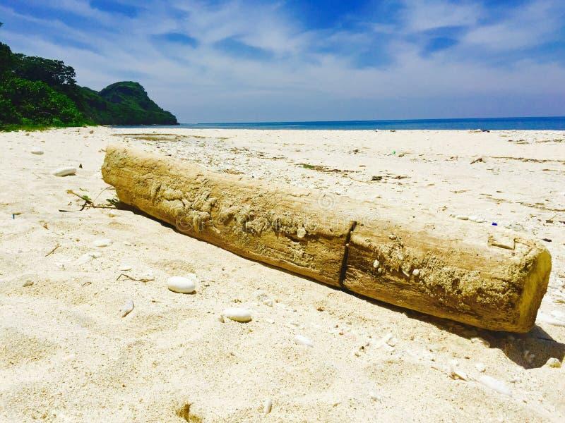 Rot logboek die op het lange witte strand van Capones-Eiland liggen stock afbeelding