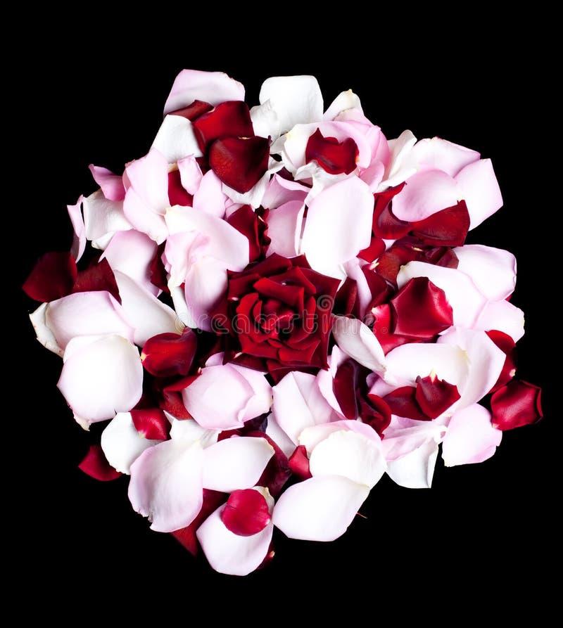Rot rosafarben und Blumenblätter lizenzfreies stockfoto