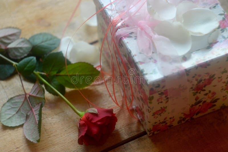 Rot rosafarben und Geschenk stockbild
