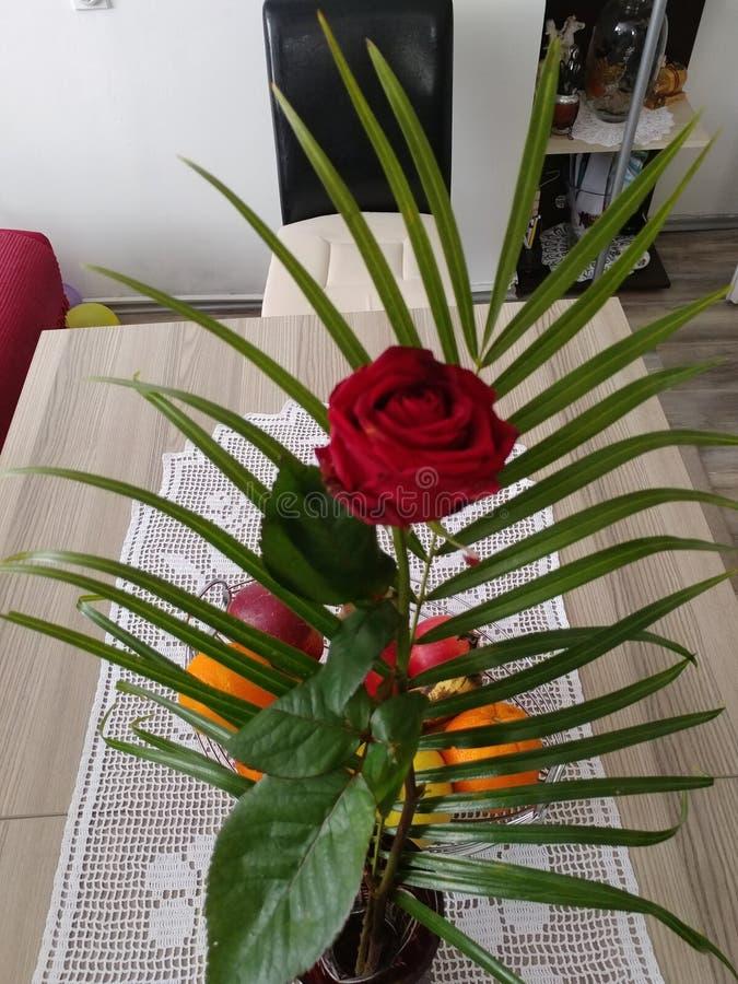 Rot stieg in einen Vase lizenzfreie stockfotografie