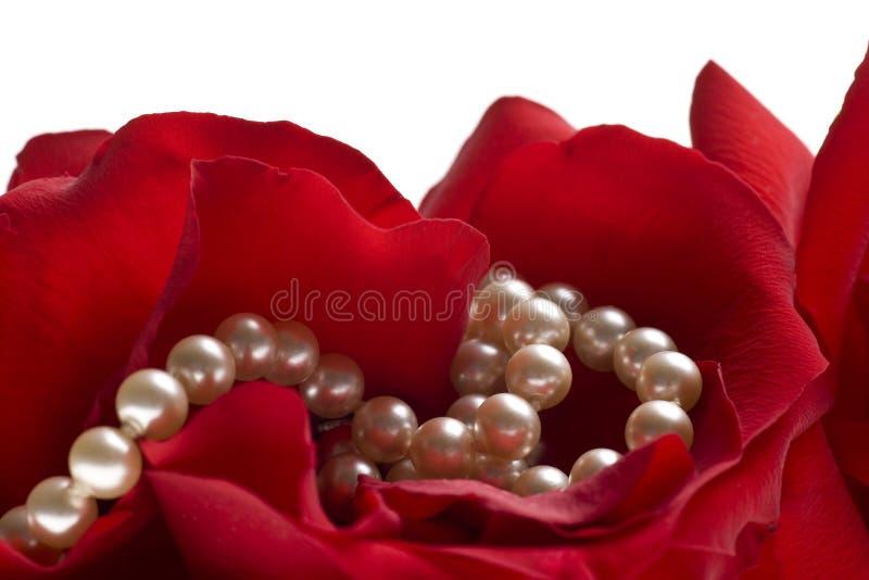 Rot stieg mit den Perlen, die auf weißem Hintergrund getrennt wurden lizenzfreie stockbilder