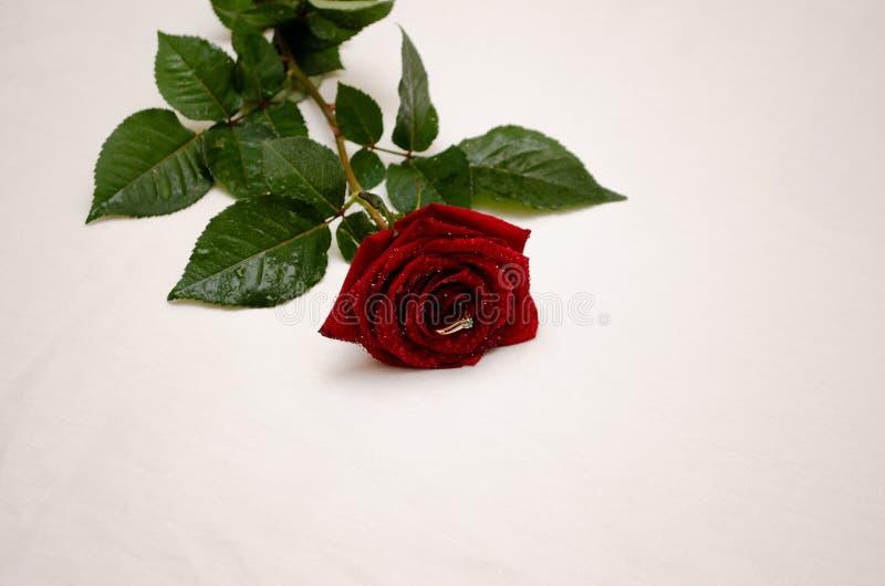 Rot stieg mit einem Ring zwischen die Blumenblätter lizenzfreies stockbild
