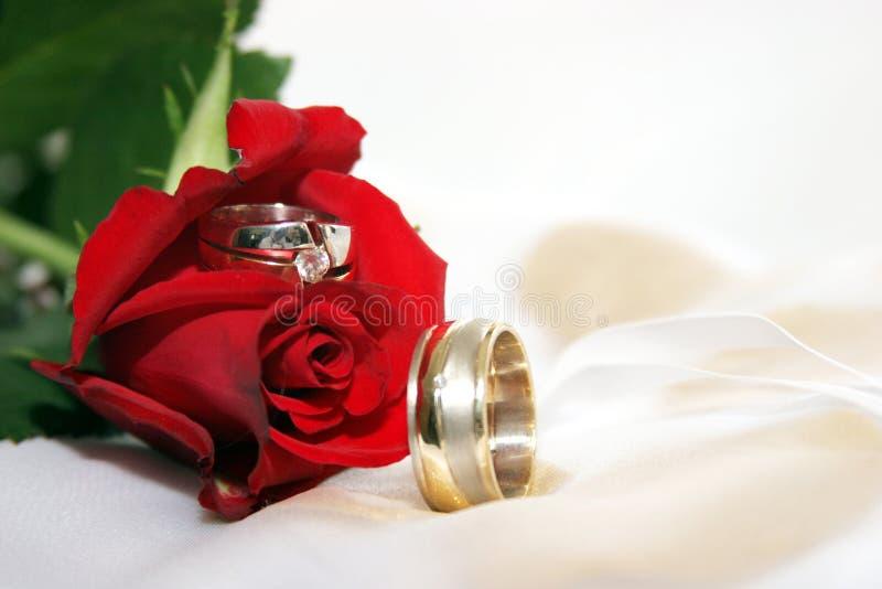Rot stieg mit Hochzeitsringen stockfotos