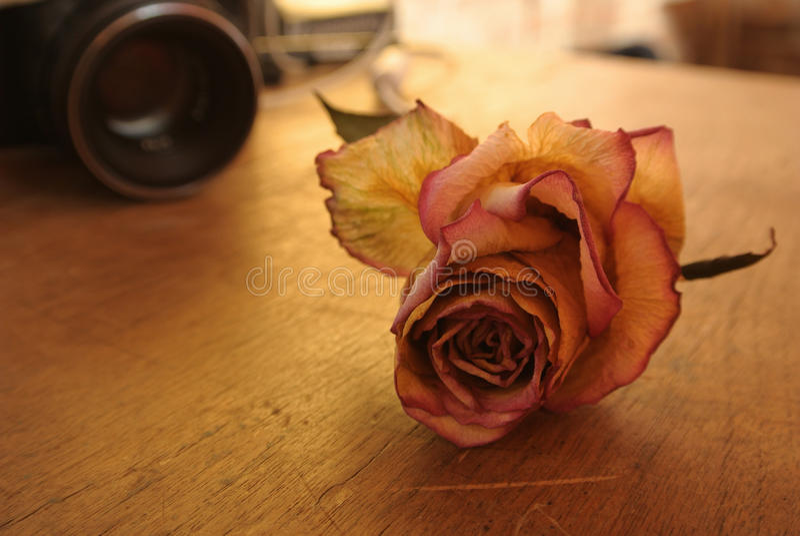 Rot trocknen Sie Rosafarbenes auf Tabelle lizenzfreies stockbild