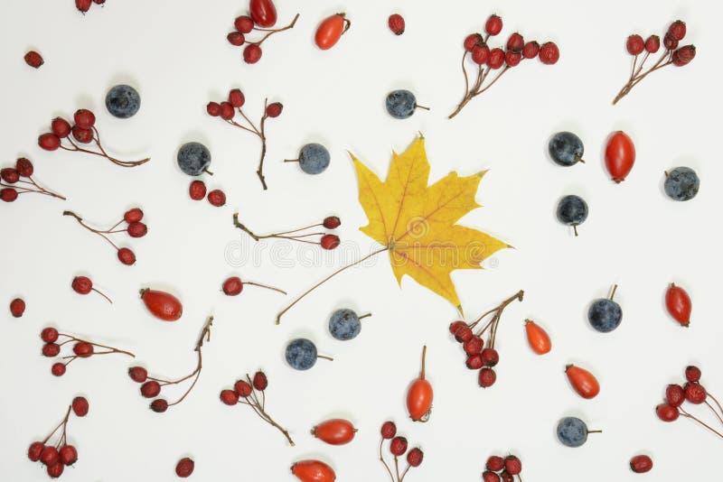 Rot und Orange färbt Efeublattnahaufnahme Zusammensetzung gemacht vom Weißdorn, dogrose, Schlehdorn, Ahornblatt auf weißem Hinter lizenzfreie stockfotos