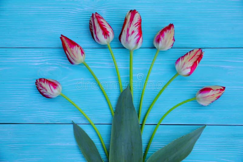 Rot-und-weiße Tulpen auf einem blauen hölzernen Hintergrund lizenzfreies stockbild