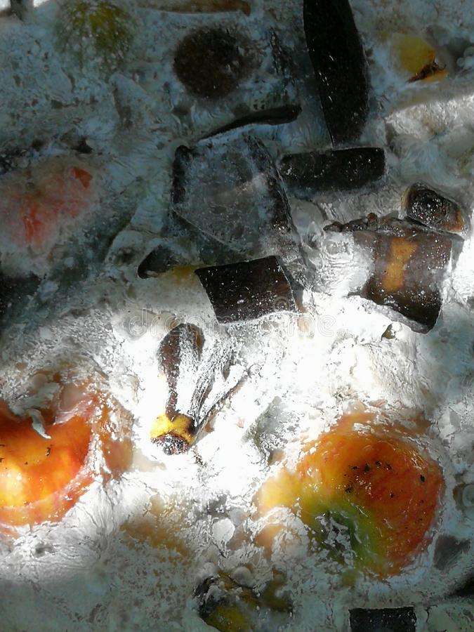 Rot voedsel, paddestoelen, bacteriën stock afbeeldingen