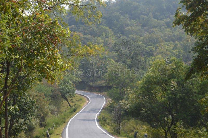Rota da floresta em karnataka foto de stock