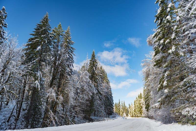 Rota do inverno na floresta em Oregon fotografia de stock royalty free