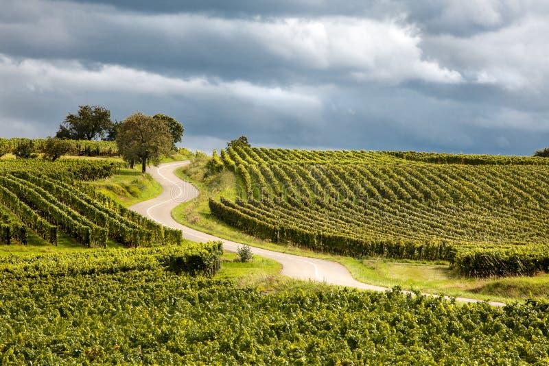 Rota du vin em Alsácia france imagem de stock royalty free