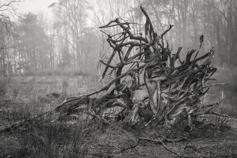 Rota mass av ett stupat träd royaltyfria bilder