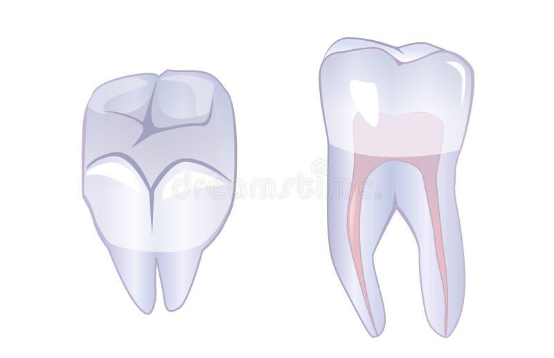 rota tanden royaltyfri illustrationer