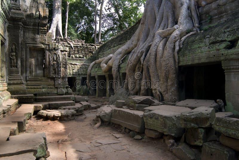 rota tempelet arkivbilder