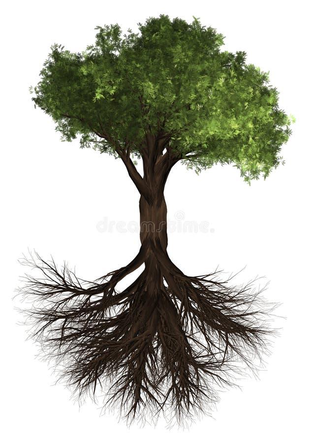 rota treen Grön Forrest trädbakgrund illustration 3d Vit bakgrundsisolat royaltyfri illustrationer