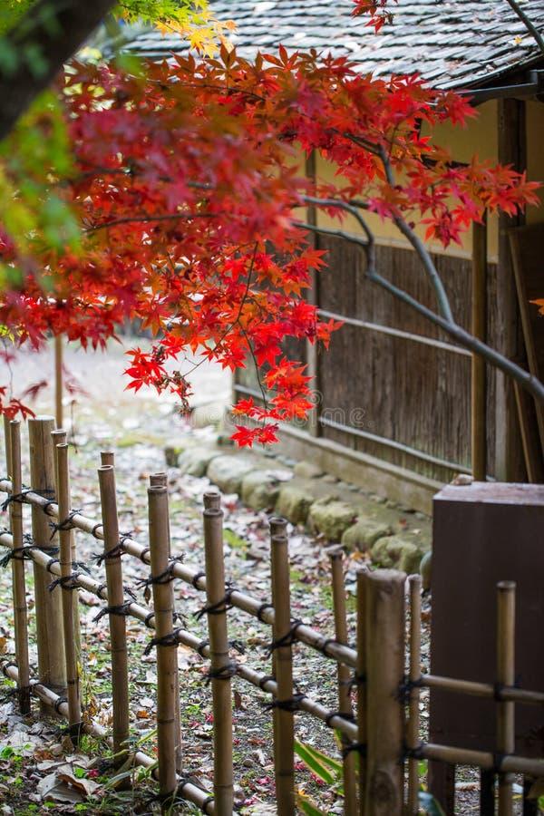 Rotahorn im Herbst mit traditionellem hölzernem Zaun und Haus von Japan lizenzfreie stockfotos