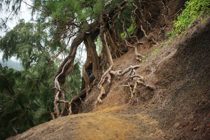 Rotar av treen royaltyfria foton
