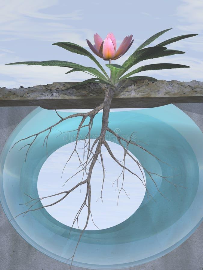 rotar den rosa primrosen för tillväxt royaltyfri illustrationer
