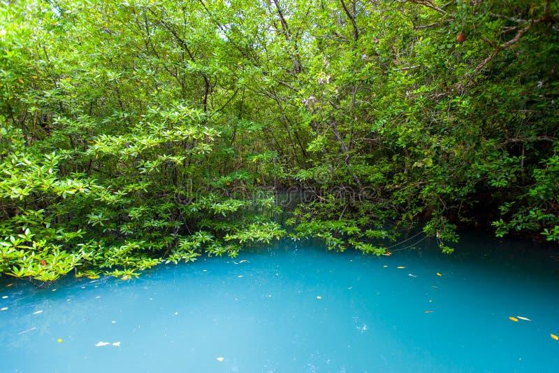Rotar och filialer, mangroveskog av Thailand royaltyfria foton