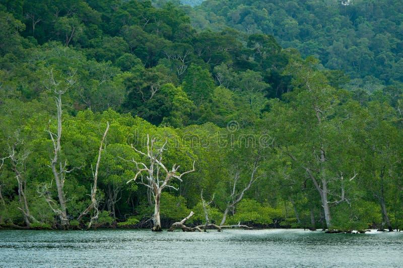 Rotar och filialer, mangroveskog av Thailand fotografering för bildbyråer