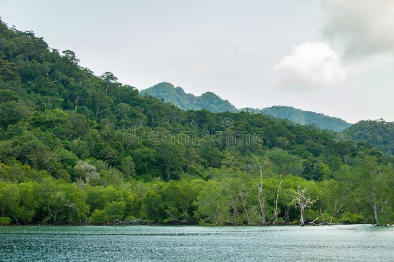 Rotar och filialer, mangroveskog av Thailand royaltyfri fotografi