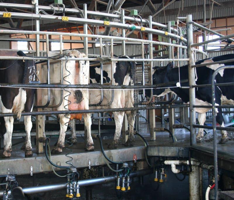Rotary Dairy stock photos
