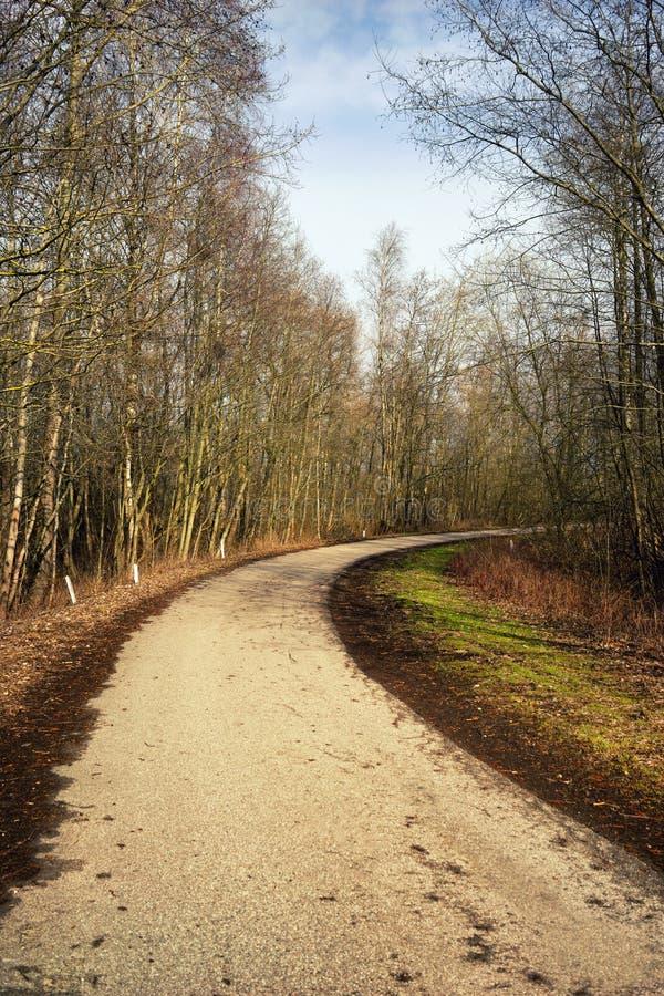 Rotation de la forêt de route goudronnée au printemps photo libre de droits
