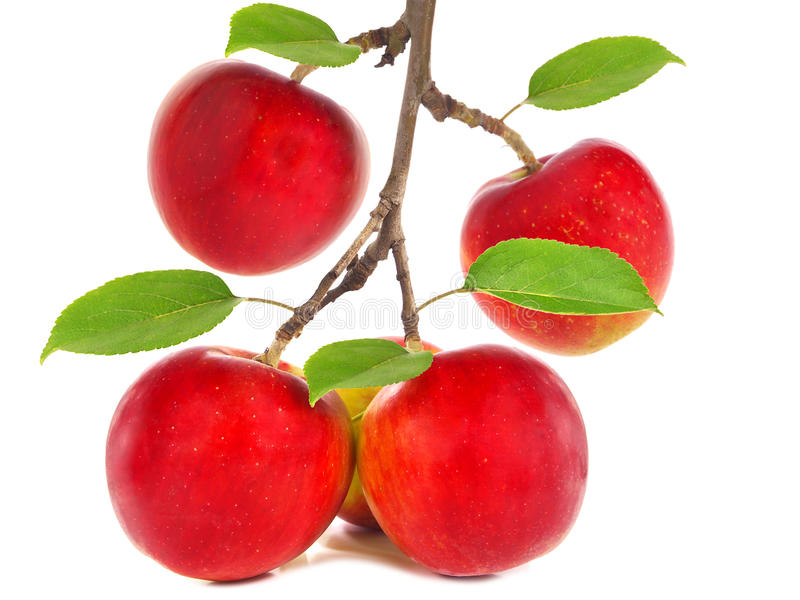 Rote Äpfel auf einem Zweig stockbilder