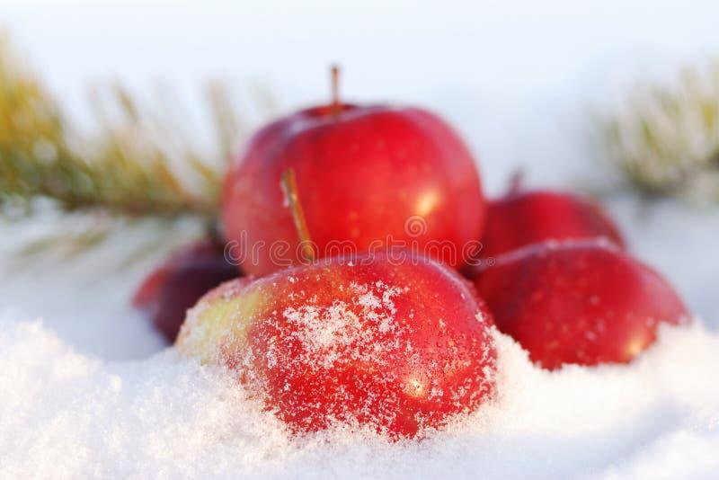 Rote Äpfel auf Schnee lizenzfreie stockfotografie