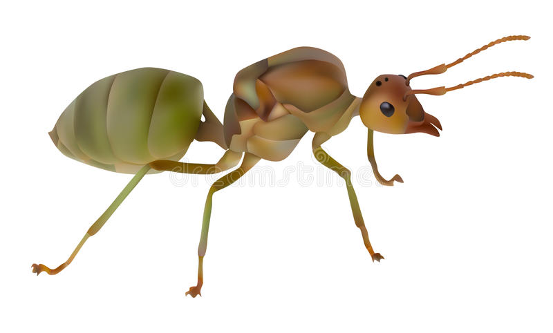 Rote Ameisenkönigin stock abbildung