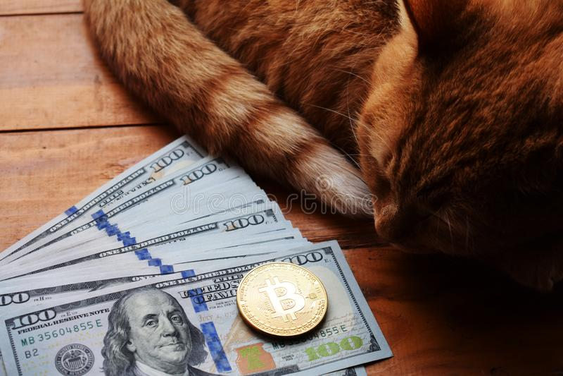 Rote Bargeldkatze mit bitcoin Münze und US-Dollars stockbilder