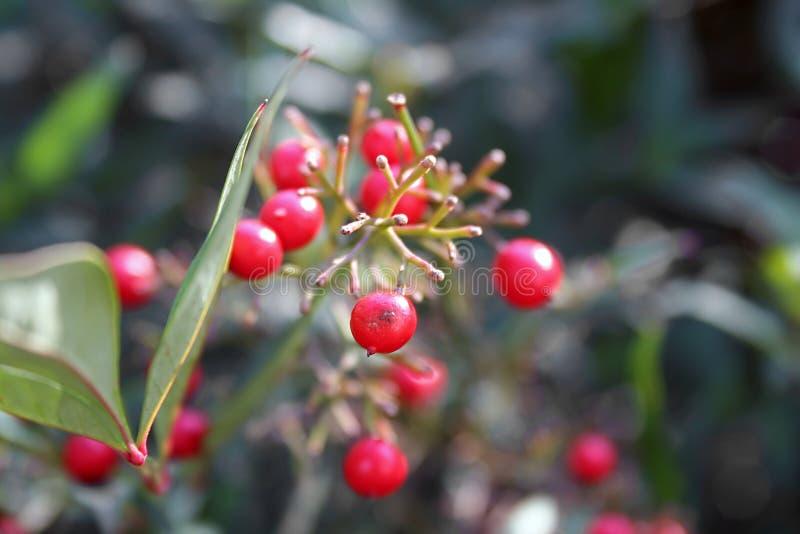 Rote Beeren auf Grünpflanze lizenzfreie stockbilder