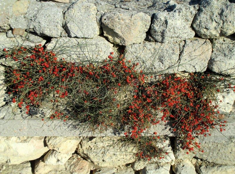 Download Rote Beeren In Der Grauen Steinwand, Horizontale Ansicht Stockfoto - Bild von aufbau, stein: 90226688