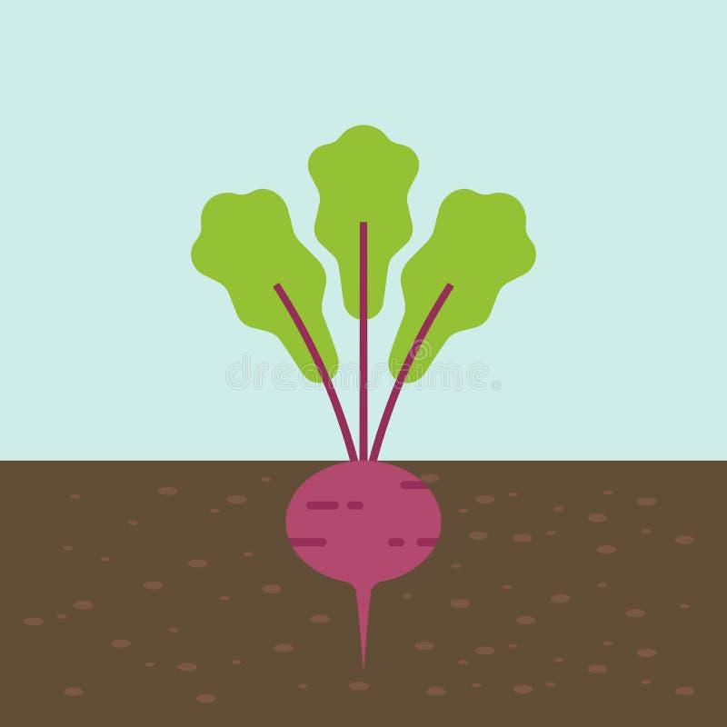 Rote-Bete-Wurzeln, Gemüse mit Wurzel in der Bodenbeschaffenheit, flacher Entwurf lizenzfreie abbildung