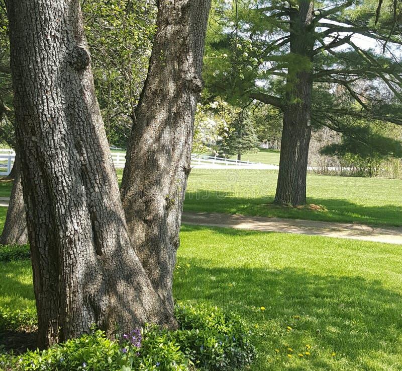 Rote Birnen auf einem Hintergrund des grünen Laubs lizenzfreies stockbild