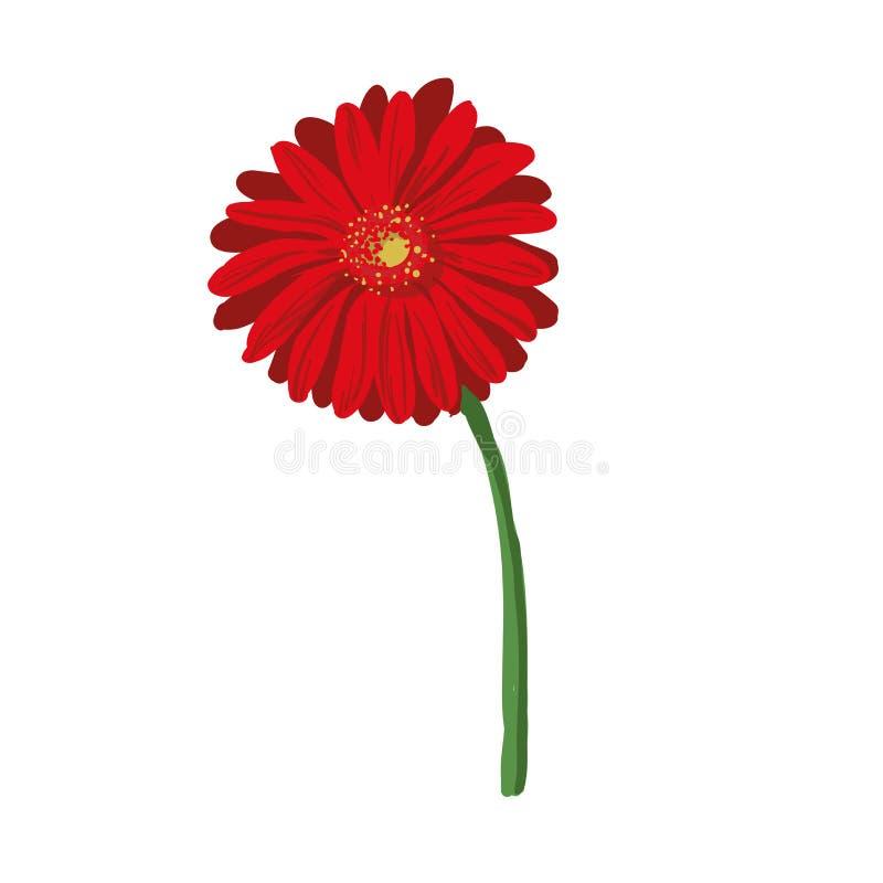 Rote Blume auf weißem Hintergrund Natürliches Eleganzillustrationsdesign mit blühendem Gerbera vektor abbildung