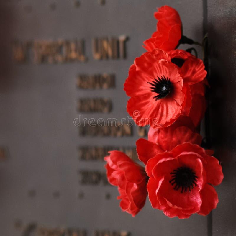 Rote Blume der Mohnblume zum Tribut zum Veteranensoldaten im Krieg lizenzfreie stockfotos
