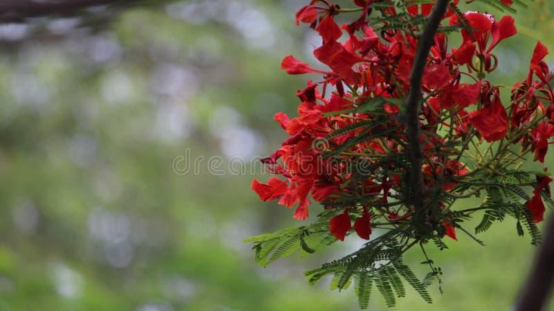 Rote Blume in der Niederlassung des Baums stockfotografie