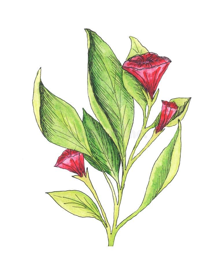 Rote Blume des Sommers auf Weißbuch stockfoto