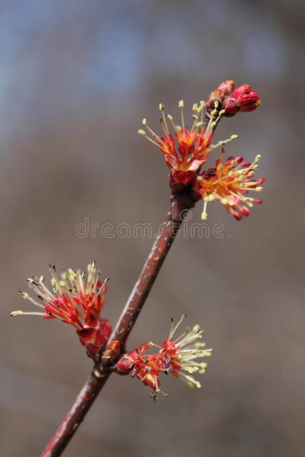 Rote Blume im Baumast stockbild
