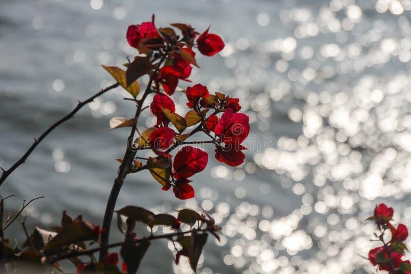 Rote Blume mit grünen Blättern stockfotos