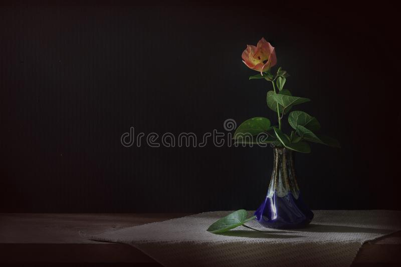 Rote Blume und Blätter in einem Vase whith hat gedämpftes Licht stockbilder