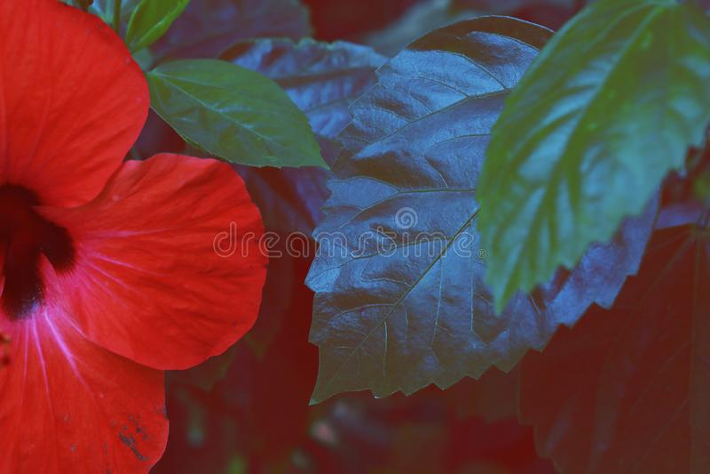 Rote Blume und grünes Blatt stockbild