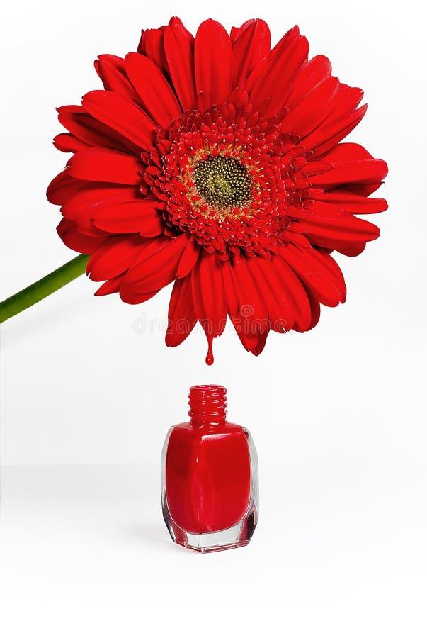 Rote Blume und Nagellack lizenzfreies stockfoto