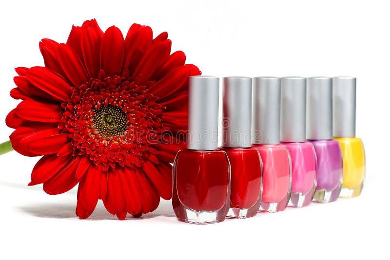 Rote Blume und Nagellacke stockfoto