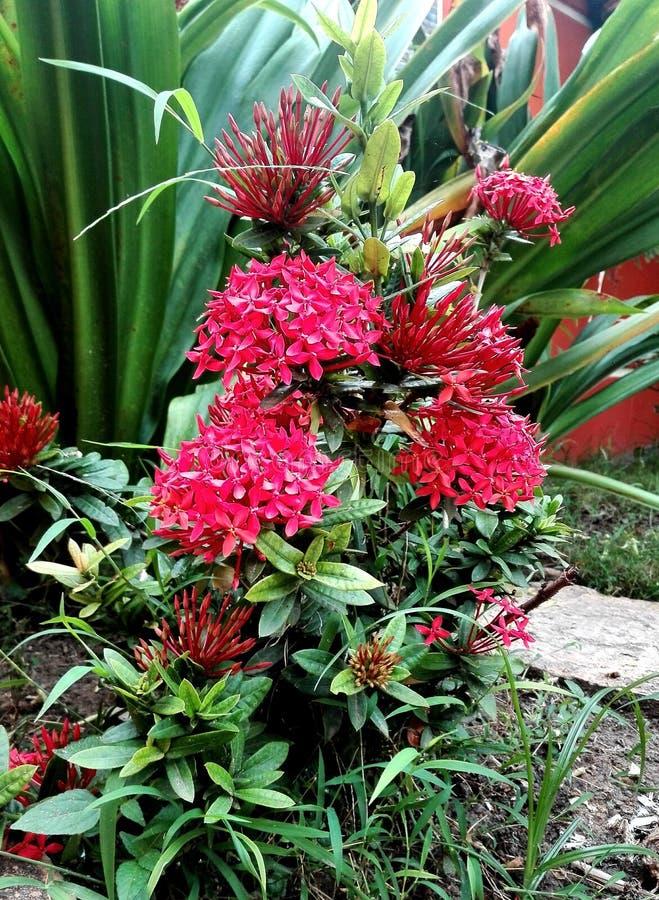 Rote Blumen lizenzfreies stockfoto