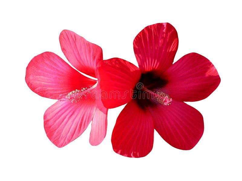 Rote blumen stockfoto bild von wachstum sommer makro 7842268 rote blumen thecheapjerseys Images